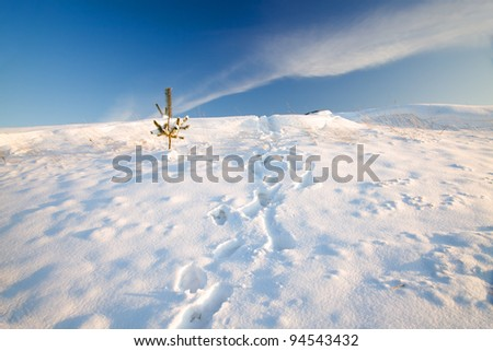 The height covered with snow in a winter season. High snowdrifts. On snow traces of one person are visible. On a height the small coniferous plant grows