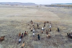 The herd of horses in autumn on pasture, grazing horses.