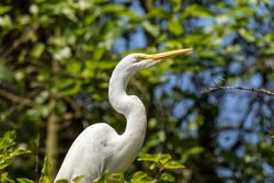 The herons are long-legged freshwater and coastal birds in the family Ardeidae, with 64 recognised species