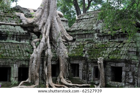 the hidden jungle temple ta prohm near angkor wat in siem reap,cambodia is one of the most fascinating places on planet earth.
