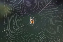 The home of the spider, in the middle of the spider web.