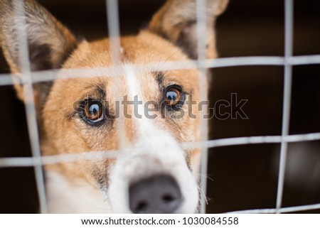 the homeless dog behind the bars looks with huge sad eyes with the hope of finding a home and a host