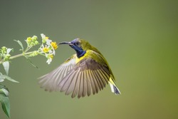 the honey soo yummy , make the male songbird cone to the flower