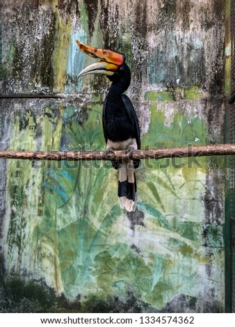 The hornbills Bucerotidae are a family of bird