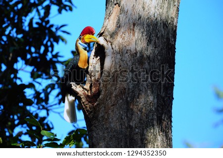The hornbills (Bucerotidae) are a family of bird found in tropical and subtropical Africa, Asia and Melanesia. They are characterized by a long, down-curved bill which is frequently brightly colored a