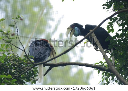 The hornbills (Bucerotidae) are a family of bird found in tropical and subtropical Africa, Asia and Melanesia. They are characterized by a long, down-curved bill which is frequently brightly colored