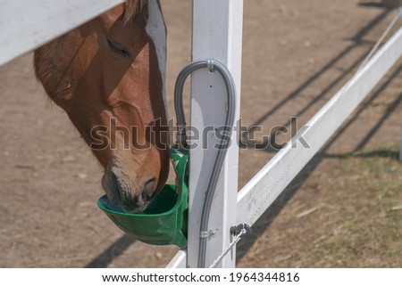 The horse drinks water from a special, automatic bowls for cattle on the farm. The concept of human-nature relations. Animal care. Holsteiner horse is drinking from auto drinker. Horse in the stable. Photo stock ©