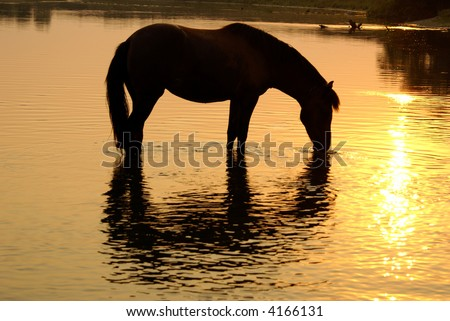 The horse drinks water from the river