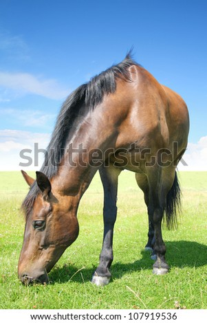 The horse from the beautiful north germany
