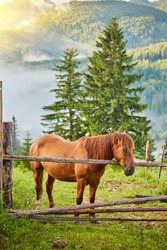 The horse graze on the meadow in the Carpathian Mountains. Misty landscape. Morning fog high in the mountains. Ukraine.