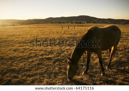 The horse in a farm