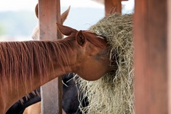 The horse in the straw