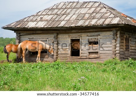 The horses in an abandoned house. In summer, in Siberia, a lot of mosquitoes. Horses flee from them hiding in abandoned homes