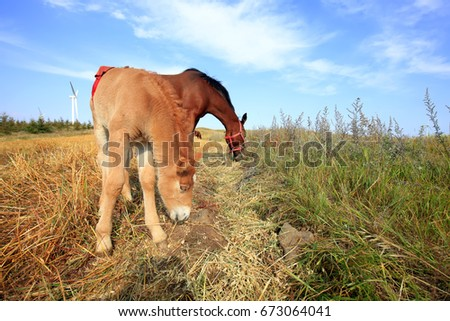 The horses in the grasslands of autumn #673064041