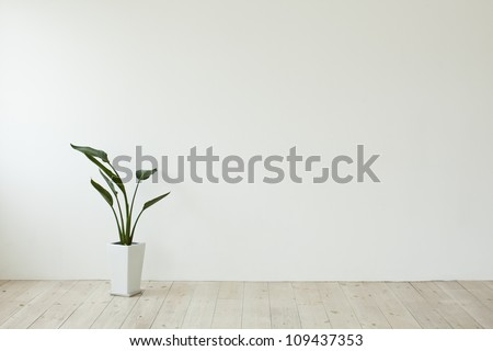 The houseplant which is put in the room