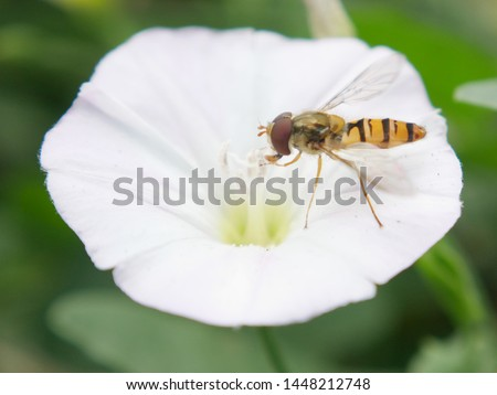 The hoverfly is commonly mistaken for bees. Their narrow body has a bit more shine to them than your typical garden friend. They pollinate without having stingers. Have to love that! #1448212748