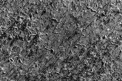 The hull of an old yacht with dried marine microorganisms in black and white.