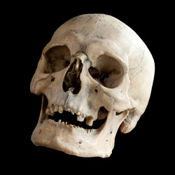 The human skull. View from below, side view. Human anatomy. Isolated on a black background.