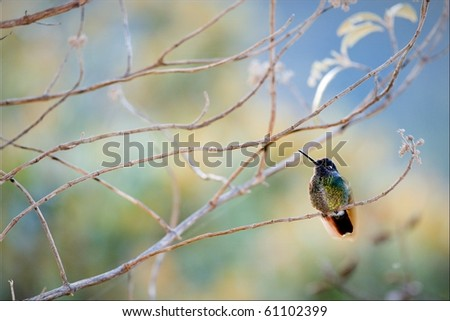 The hummingbird sits on a branch on a colourful background of color stains of foliage.