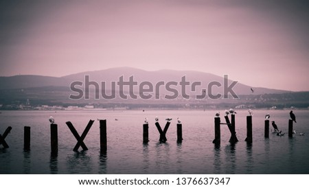 The image of a cormorant and seagulls sitting on stilts.