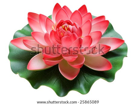 The image of a flower and lotus sheet on a white background