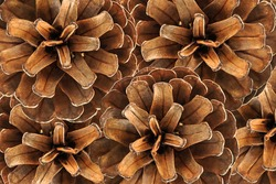 The image of a pine cones