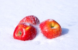 The image of apples on snow during a snowfall