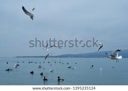 The image of birds on the beach.