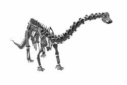 The image of dinosaur's skeleton