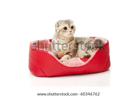 The image of the cat sitting in the cat mat on white background