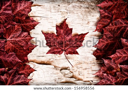 Stock Photo The image of the flag of Canada constructed entirely out of genuine maple leaves and white birch bark from species native to that country.