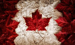 The image of the flag of Canada constructed entirely out of genuine maple leaves from species native to that country.  Laid out on top of worn out particle board.