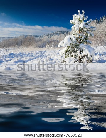 The image with a pine covered with a snow under the blue sky
