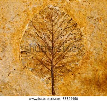 The Imprint leaf on cement floor