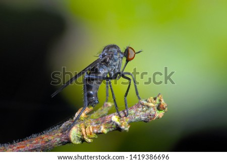 The insectivorous gadfly perches on the field plants #1419386696