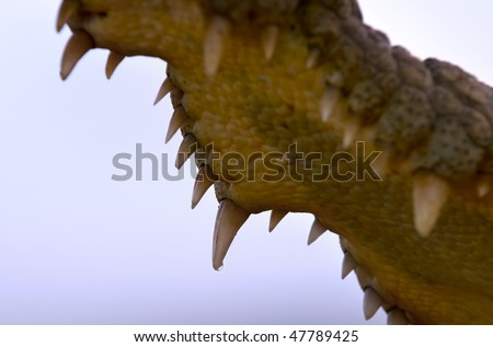 The Inside of a Nile Crocodile's mouth with teeth against a blue sky