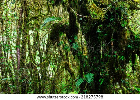 The integrity of the forest. Doi Inthanon National Park. Chiang Mai, Thailand #218275798