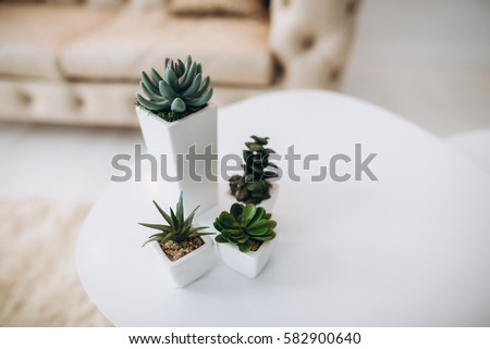The interior, minimalism, hi-tech, comfort. Small stylish flowerpots on a white table in a light room, at home. Side view #582900640