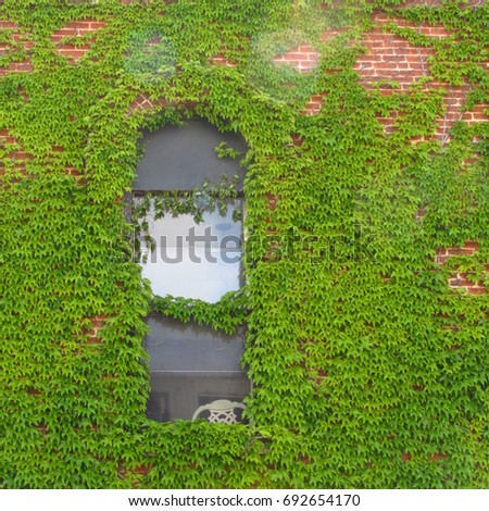 the ivy and the window arched window with ivy growing around it on a