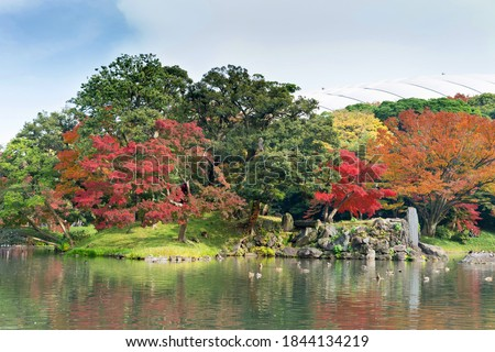 the Japanese maple leaves autumn color of Japan, maple leaves tree is green, yellow, orange and red discoloration and refletion on water pond in the park, japanese park Foto stock ©
