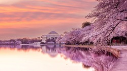 The Jefferson Memorial during the Cherry Blossom Festival. Washington, D.C. in USA