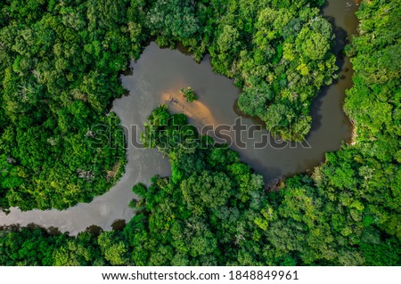the jungle crossed by a river Foto stock ©