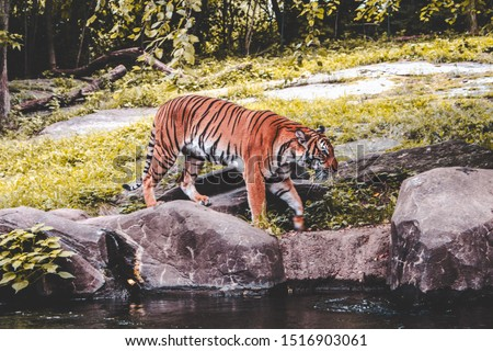 The jungle's most fierce animal #1516903061