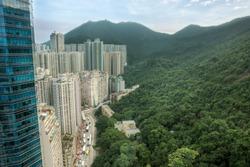 The jungles vs the city