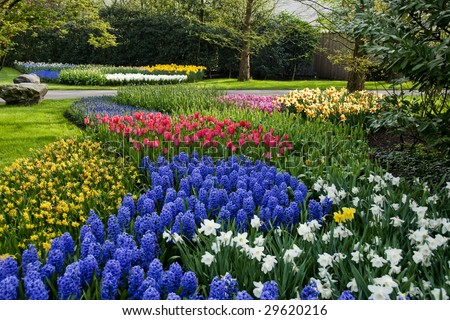 The Keukenhof garden in Lisse, the Netherlands is the largest spring bulb garden in the world.