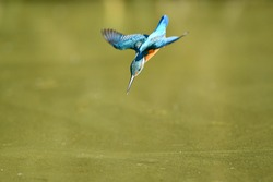 The kingfisher who is stepping down