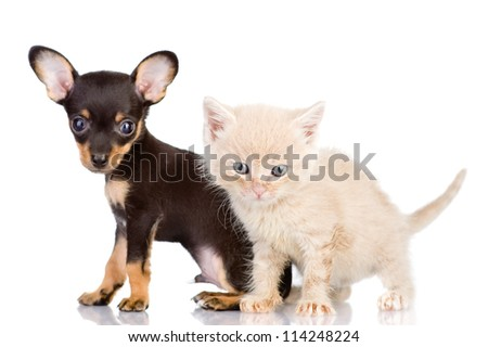 the kitten and puppy with astonishment look. focus on a kitten. isolated on white background