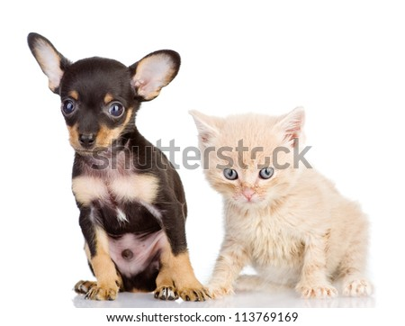 the kitten and puppy with astonishment look. isolated on white background