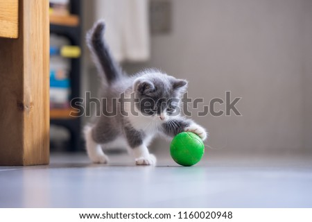 The kitten is playing with a ball #1160020948