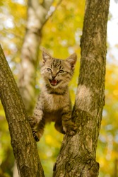 The kitten is stuck in a tree and is plaintively lighthouse